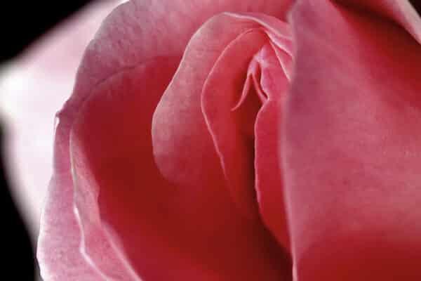 Sexuální hračky omlazují vagínu | Hedonist